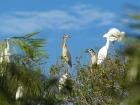トリ園では珍しい鳥をご覧になれます。