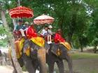 象乗り体験は楽しみの一つ!