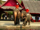 象のショーの様子