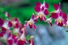 国立蘭園の花