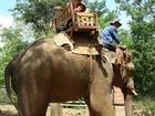 象に乗って