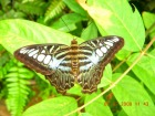 南国の珍しい蝶