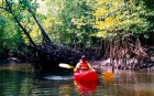 マングローブの生い茂る川でのカヤック