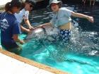 イルカと触れ合えます。