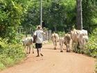 農村で牛や豚などの世話体験
