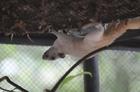 危険のない動物なら檻の中に入って見学できます