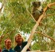 野生のコアラを探そう