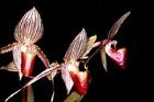山岳植物園で珍しい植物や鳥などを観察