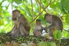 いました!野生の猿