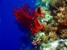 カラフルなサンゴ
