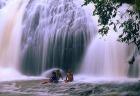 天然シャワー