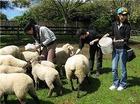 羊にえさをあげたり