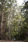 ユーカリ林の中を駆けていきます。