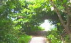 グリーン島内の遊歩道