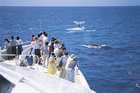 この時期だけ可能なクジラウォッチング