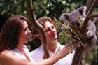 コアラと対面