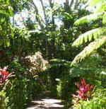 グリーン島内には、色々なトロピカル植物が咲いています。
