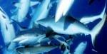 迫力のサメ!