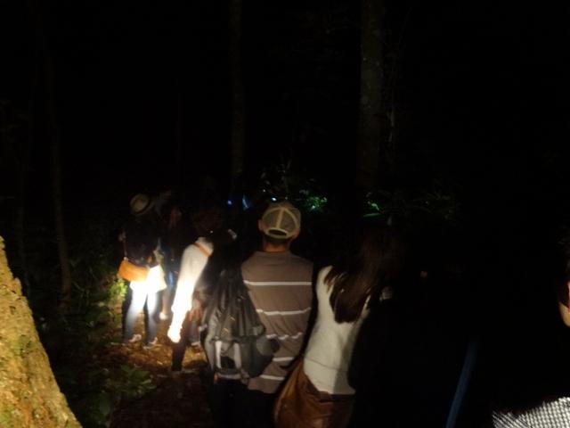 夜の熱帯雨林散策