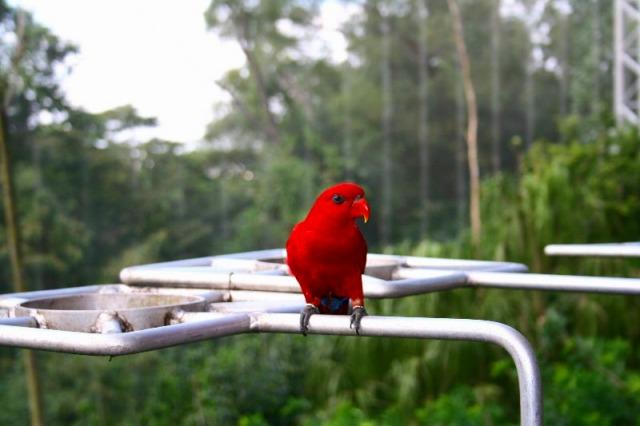 南国のジャングルに鮮やかな赤が映えます
