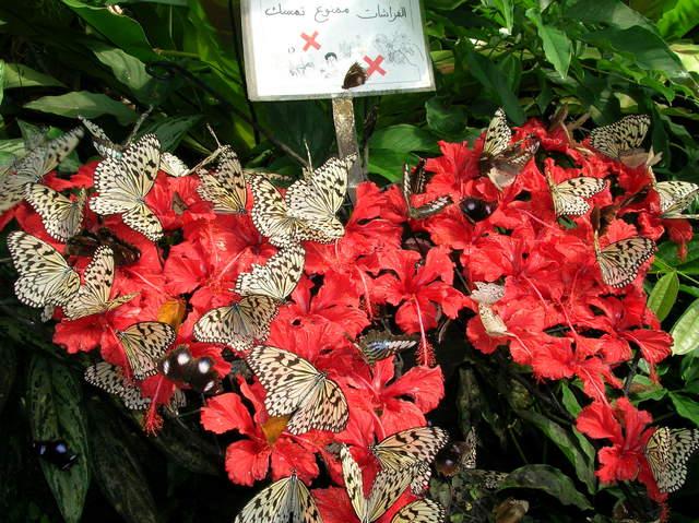 南国の美しい蝶たち