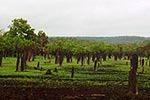 リッチフィールド国立公園に並ぶアリ塚