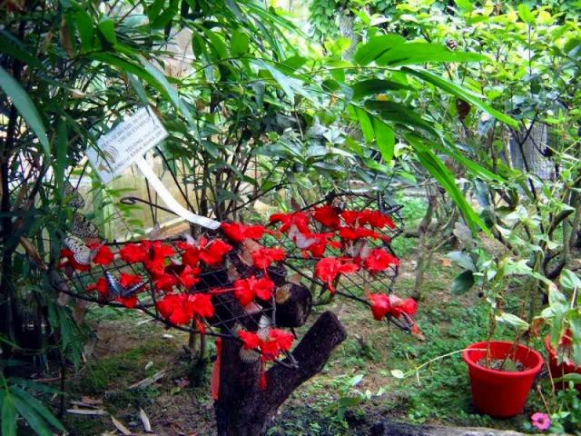 生きた蝶の博物館と言われる蝶園