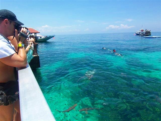 透明度の高い海には魚もいっぱい!!