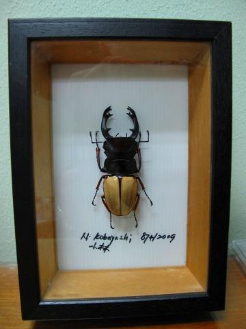 世界で一つだけのオリジナル標本
