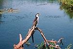 カカドゥには様々な野生動物が住む