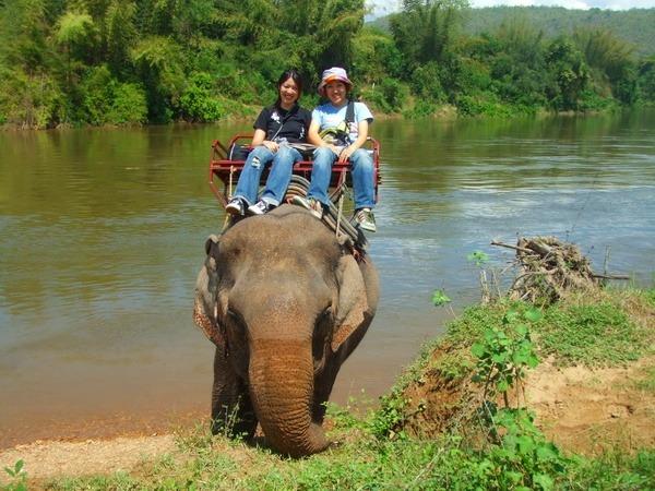 象に乗って川を渡る!