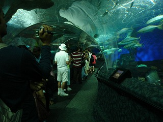 まるで海の中のトンネル