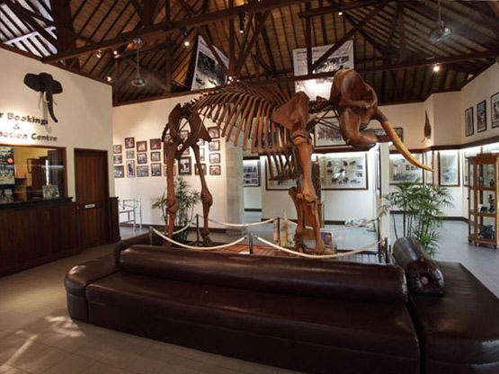 エレファントサファリパーク内の博物館