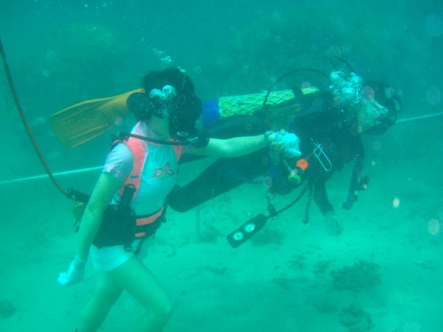 水中を探索