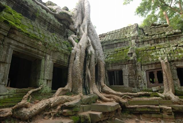 都市のような仏教寺院遺跡「タ・プローム」