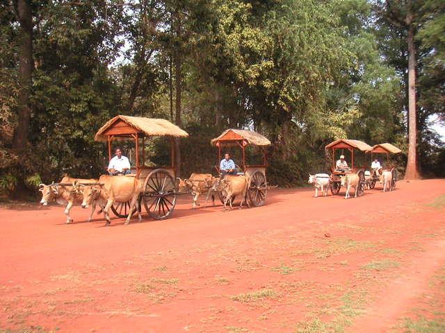 牛車に乗って遺跡観光
