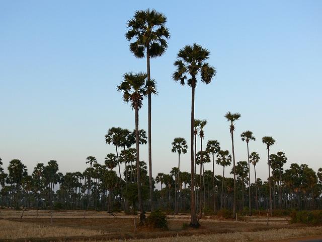 緑に囲まれたカンボジアの大地