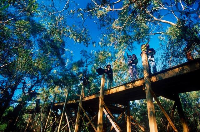 野生のコアラ保護センター
