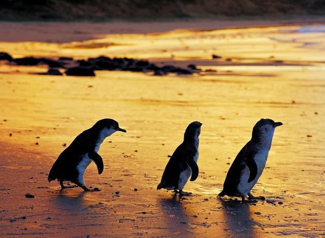 最後にペンギンとご対面