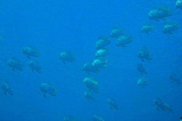 海の中は幻想的