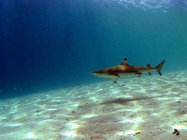サメも見れるかも。