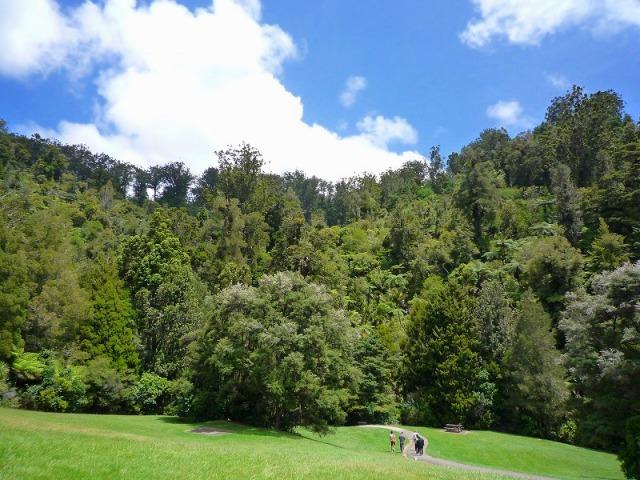 カウリの森を散策