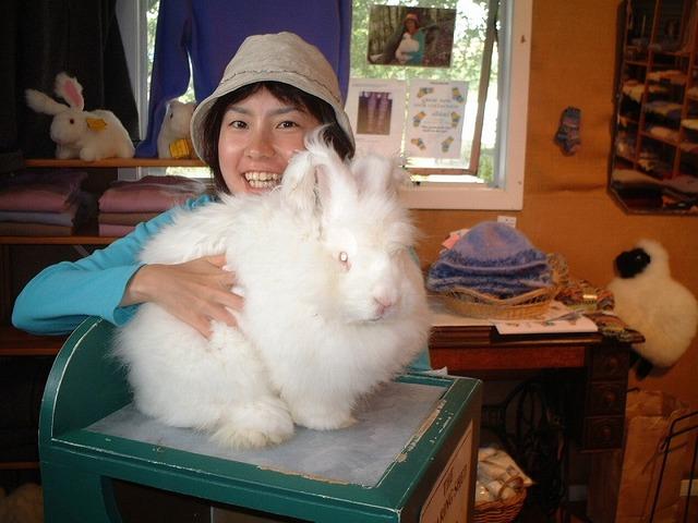 ふかふかのアンゴラウサギ
