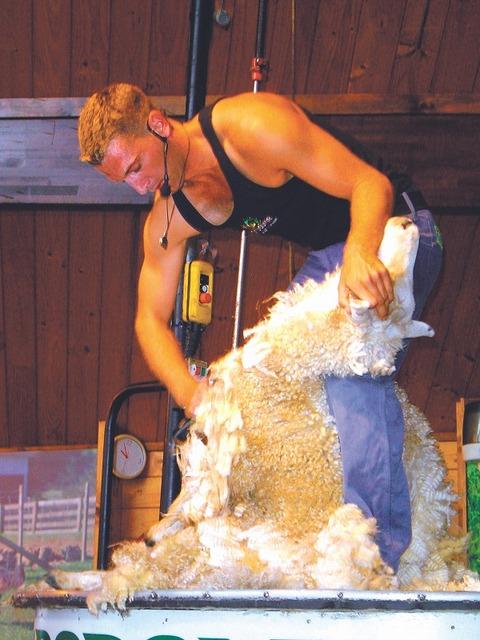 羊の毛狩りショー