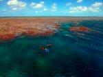珊瑚のうえをシュノーケリング