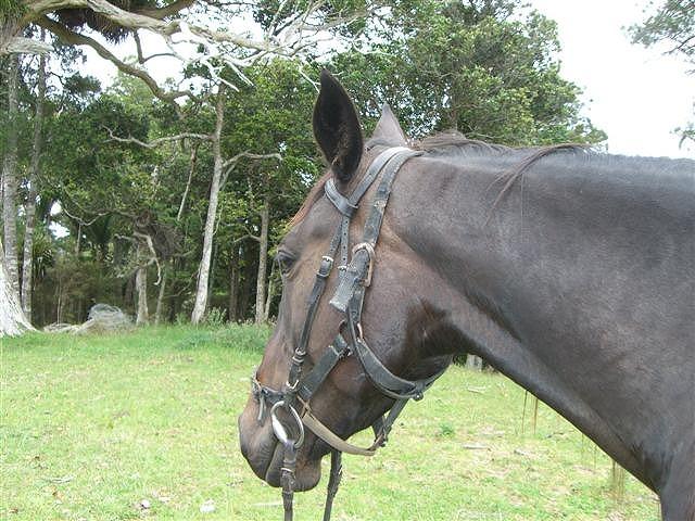 おりこうな馬
