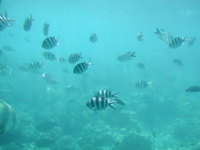 水中ではたくさんの熱帯魚が!