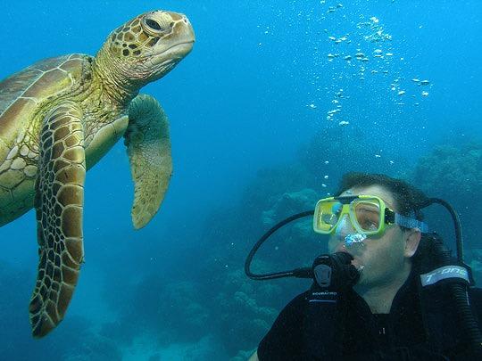 ダイビングでは海がめに出会えるかも