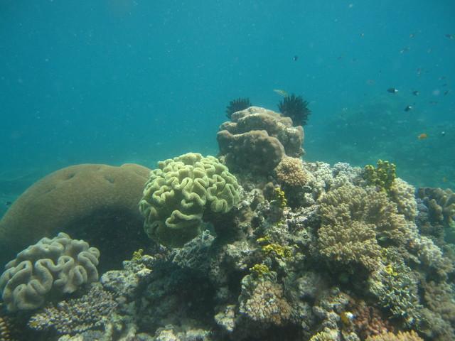 サンゴを堪能しましょう