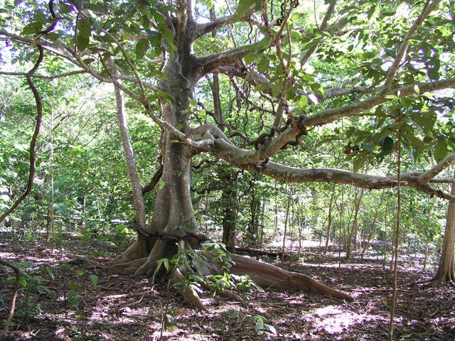 熱帯雨林の様子